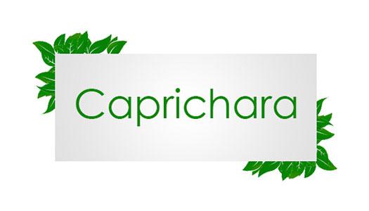 CAPRICHARA Image